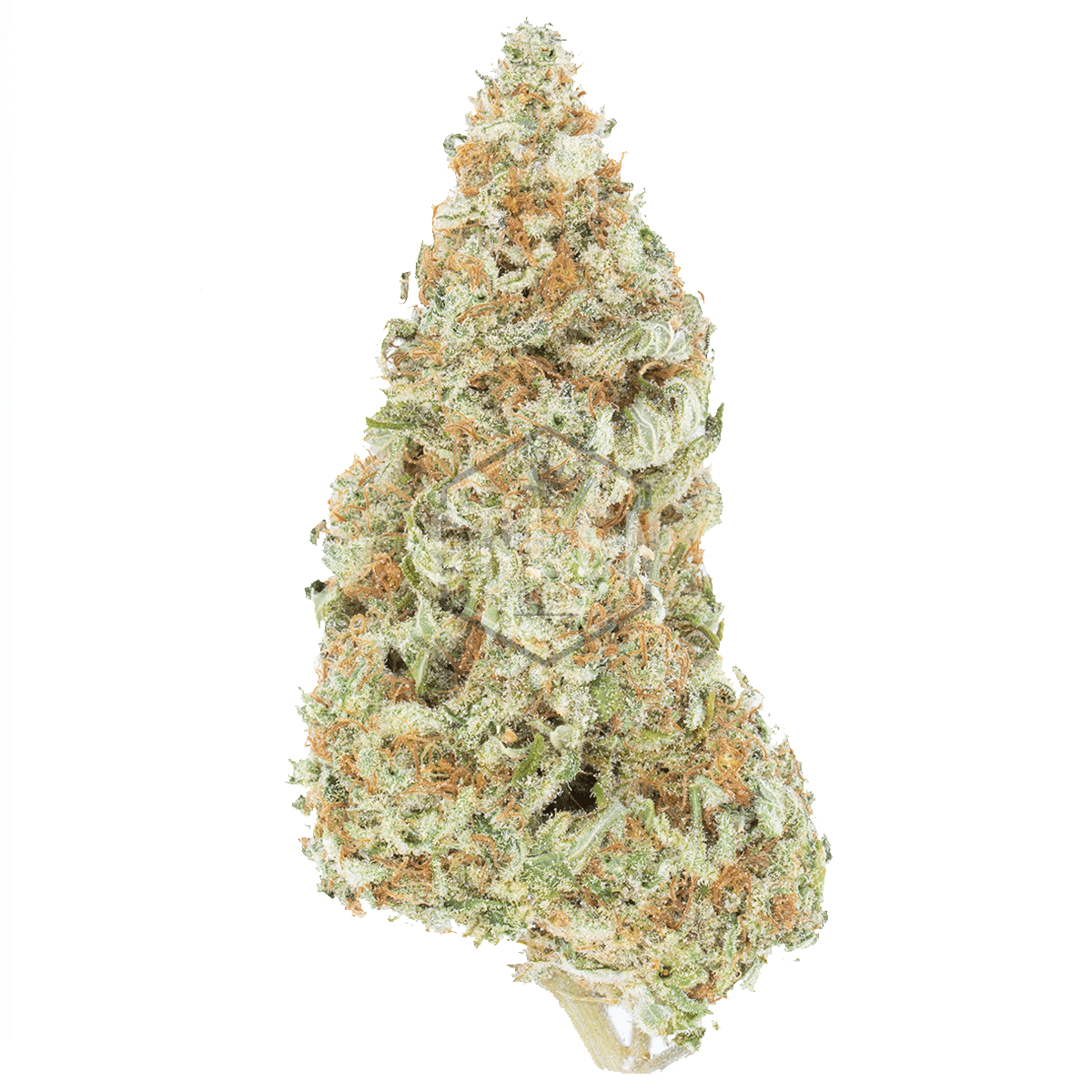 Bruce Banner by Green Society - Image © 2018 Green Society. All Rights Reserved.