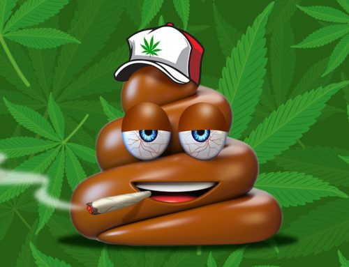 The Turd Test: Canada studied poop to figure out how much pot people use